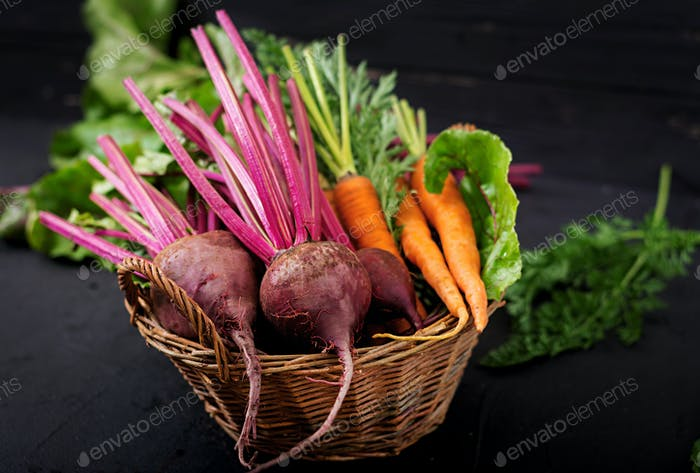 Young beetroot and carrots with a tops in a basket on a dark background.