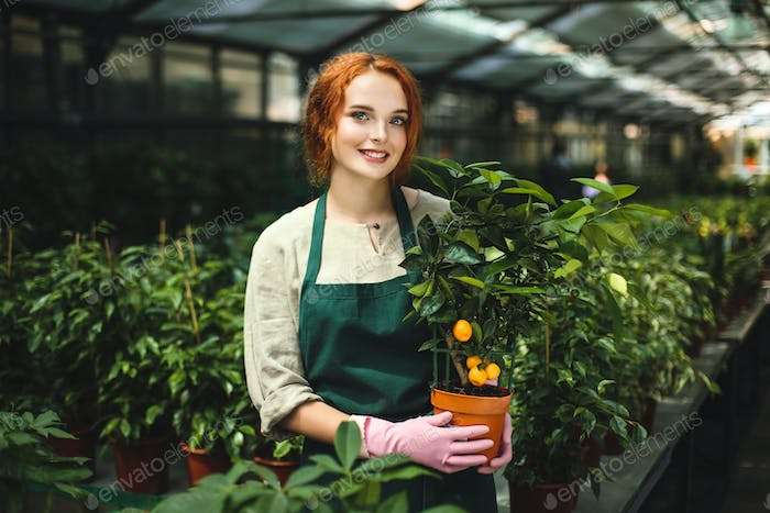 Beautiful smiling florist in apron and pink gloves standing with little mandarin tree in pot