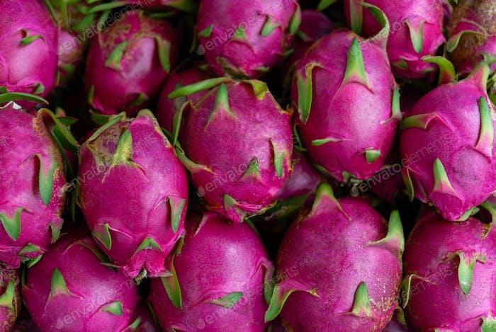Lots of the ripe pitaya fruit on harvest season