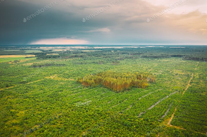 Aerial View Green Forest Deforestation Area Landscape. Top View Of New Young Growing Forest