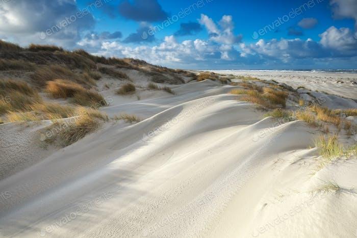 Sanddünen am Nordseestrand am sonnigen Tag