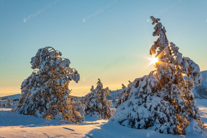 Beautiful sunset in the winter mountains. Winter fairy landscape