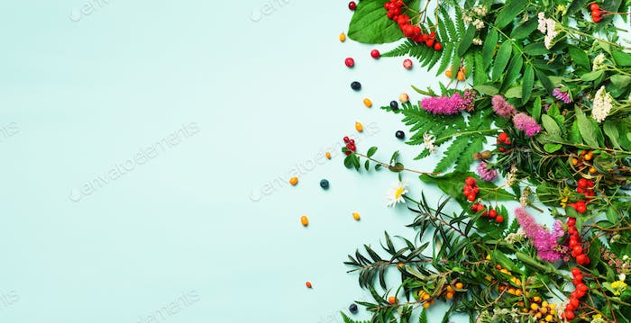Ingredients of herbal alternative medicine, holistic and naturopathy approach on blue background
