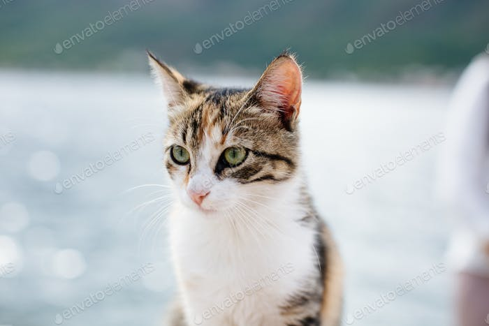 Katze Porträt