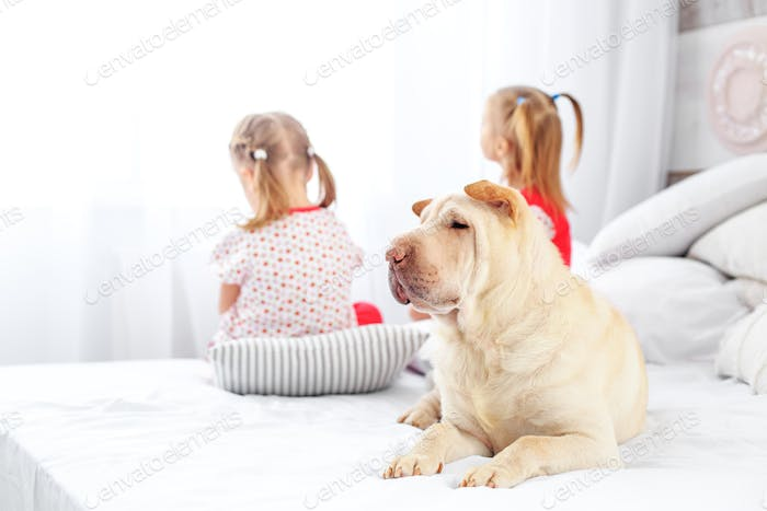 Two children sit and look out the window. The dog is lying on th