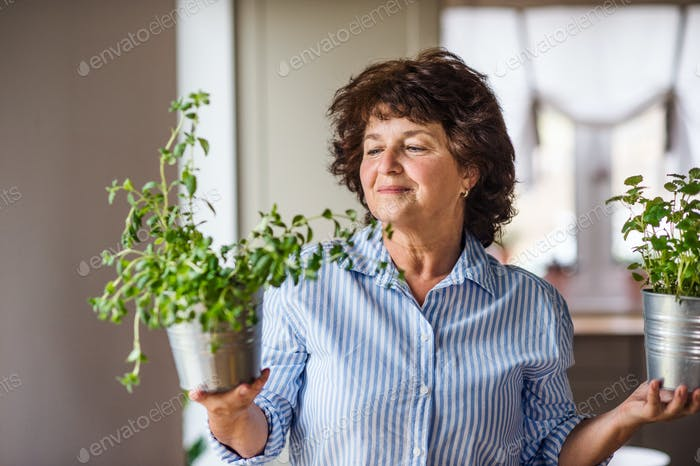 Senior woman in kitchen at home, carrying herbs in pots