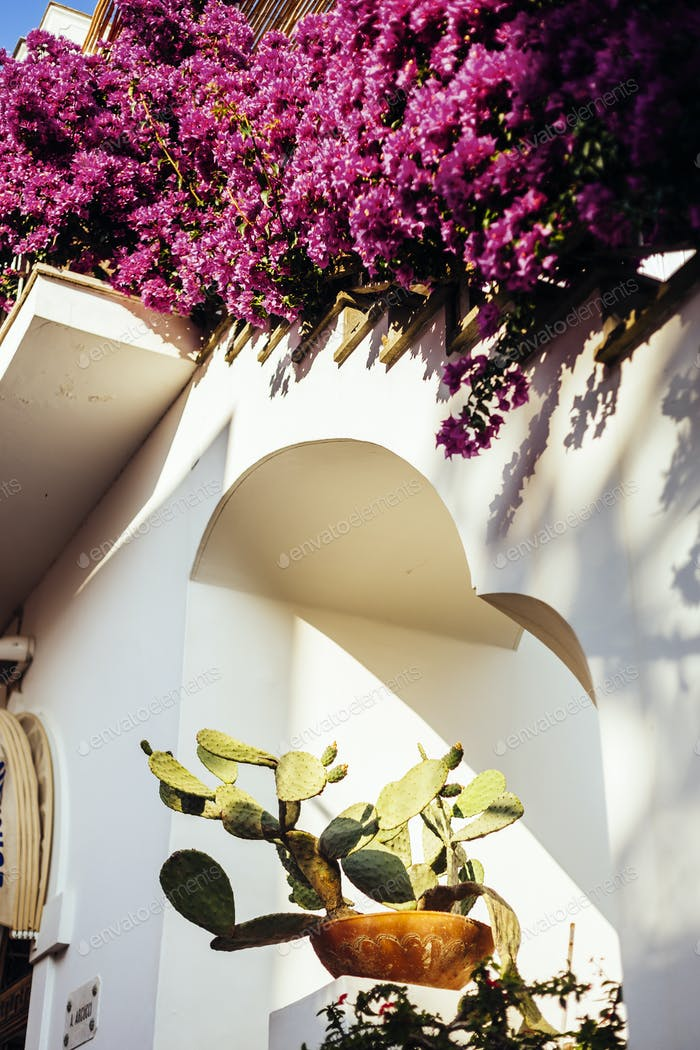 Low angle view of prickly pear cactus and bougainvillea at whitewashed building