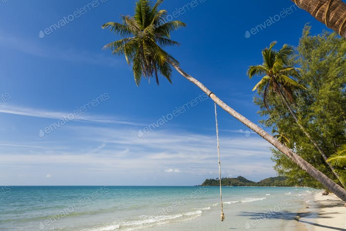 Beautiful sandy beach with coconut palms against the blue sky. T