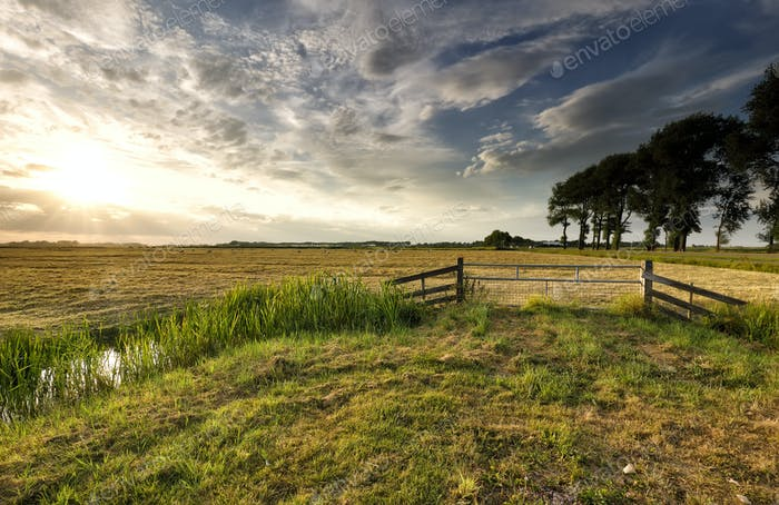 sunlight over Dutch farmland in summer