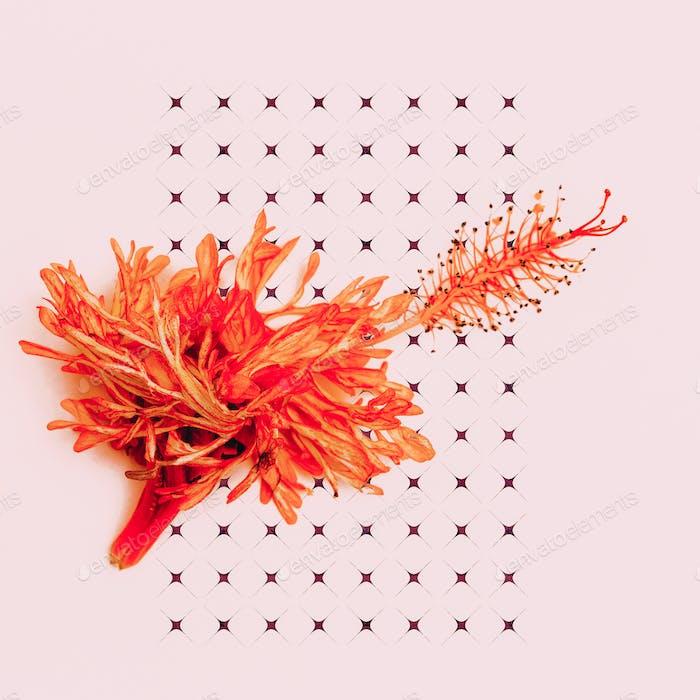Red flower on a pink. Minimal art design