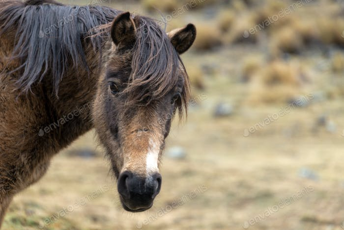 View of a Horse in Bolivia