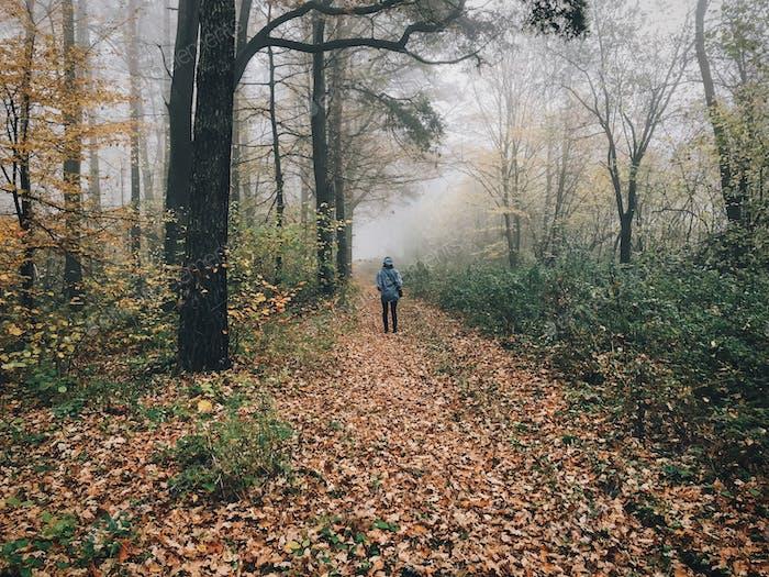 Reisender zu Fuß im Herbst nebligen Wald mit Herbstblättern