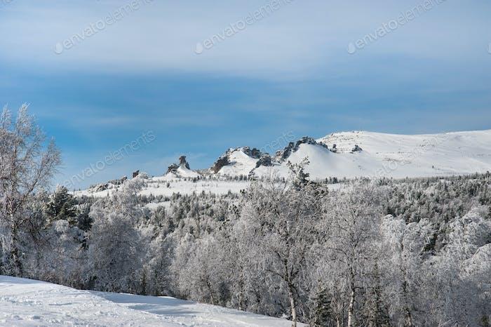 schöne Winterlandschaft im Wald