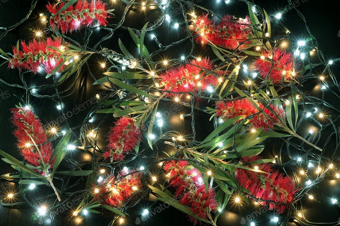Bottlebrush Blumen und Lichterketten