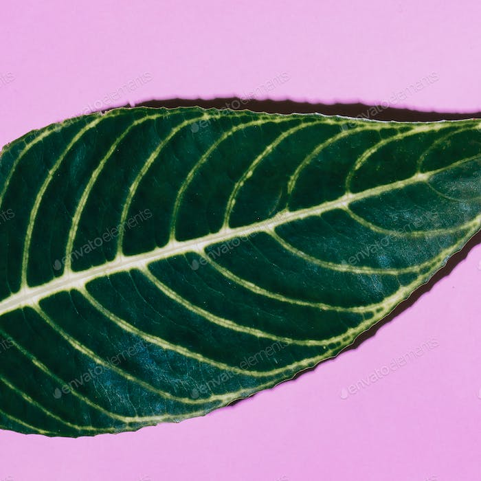Tropical leaf on pink. Minimal fashion art