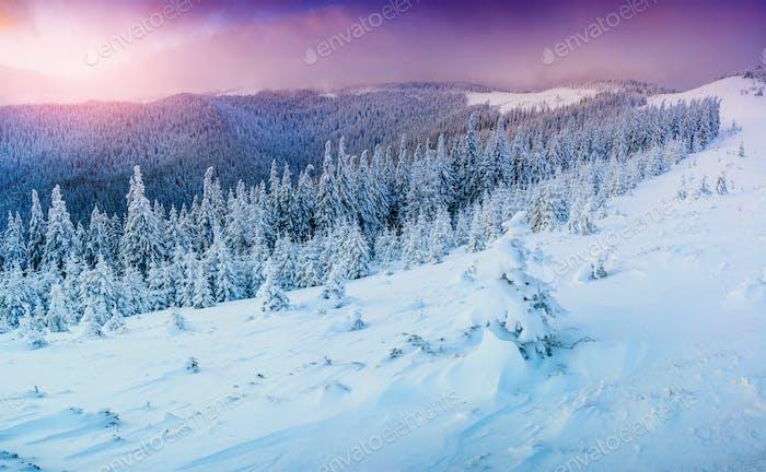 sunny winter landscape