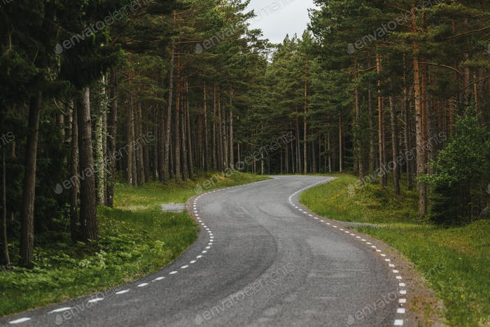 Curvy Forest Road in Estonia