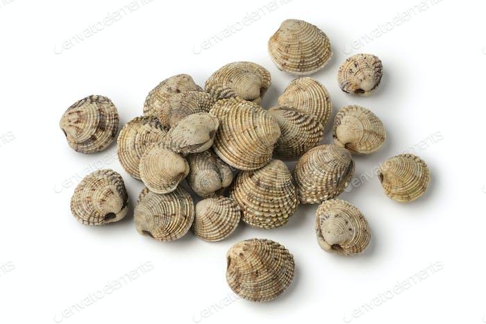 Heap of fresh raw warty venus clams