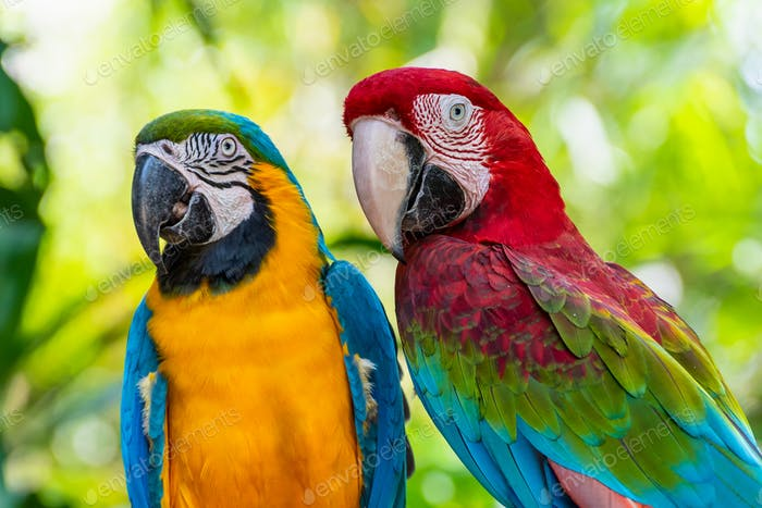 Closeup face of Macaw colorful birds