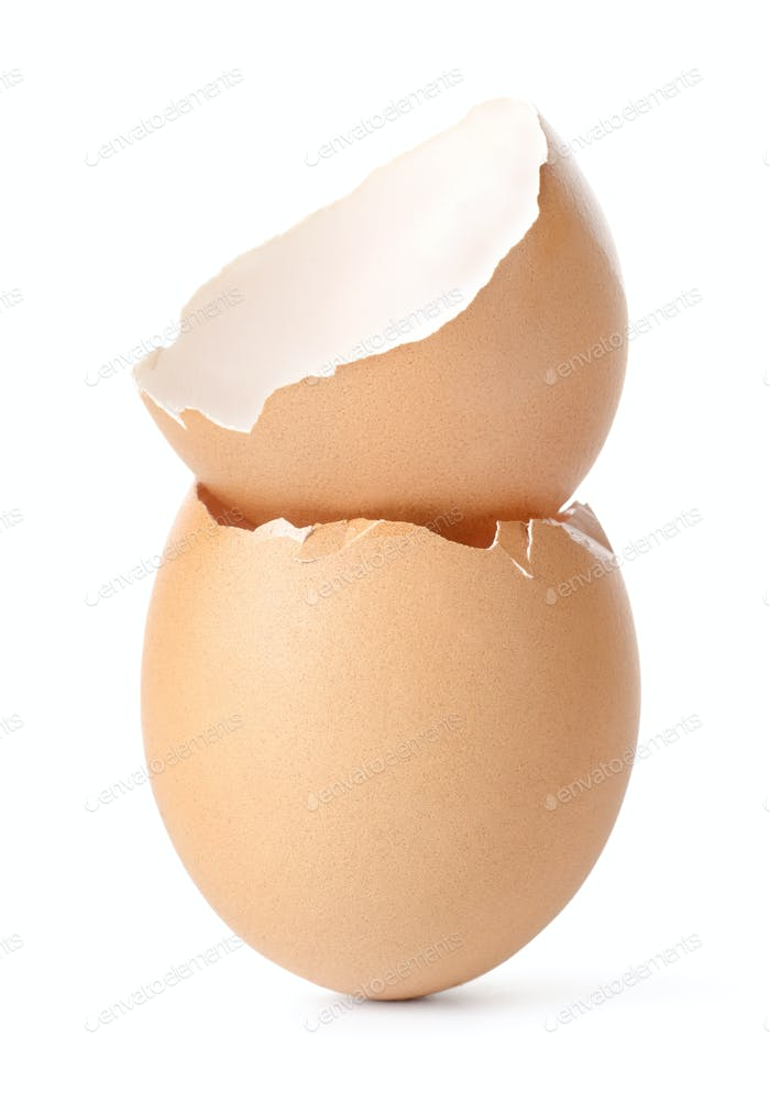 Empty egg shell