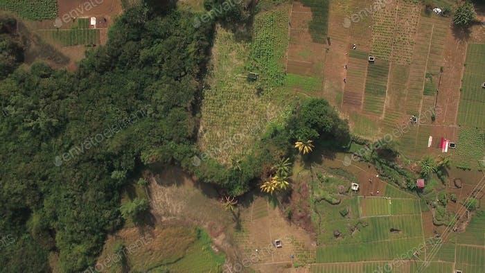 Flying over farmlands on Mauritius Island