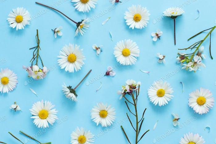 Weiße Wildblumen auf hellblauem Hintergrund