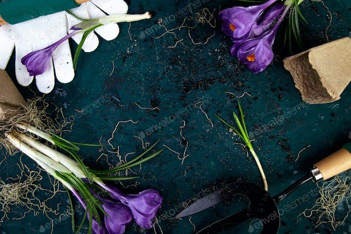 Gartengeräte, Torftöpfe, Krokusblüte. Frühling