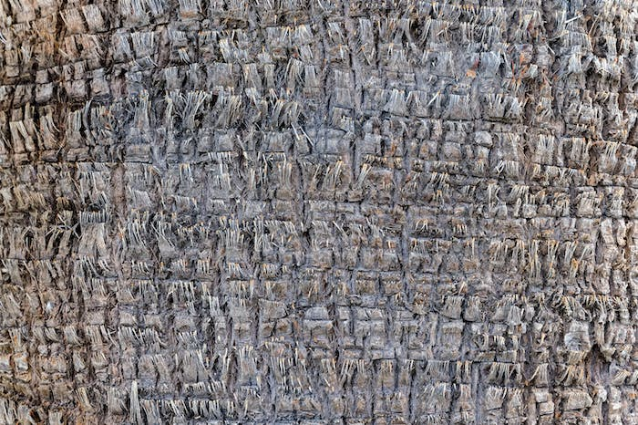 Close up of palm tree bark background texture