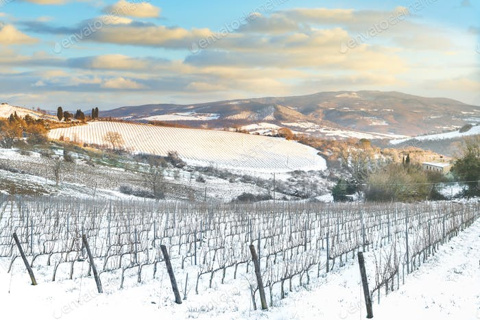 Vineyards rows covered by snow in winter at sunset. Chianti, Siena, Italy