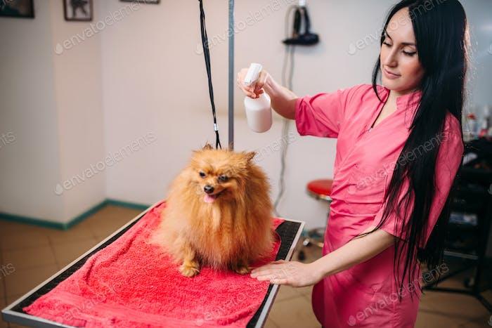 Weibliche Pet Groomer, Hund im Pflegesalon