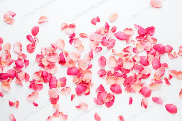 Valentine's Day. Rose flowers petals on white background.