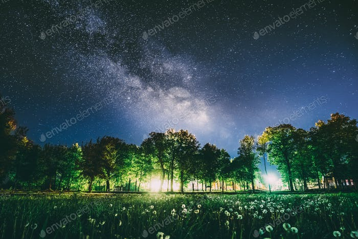 Green Trees Woods In Park Under Night Starry Sky In Violet Color