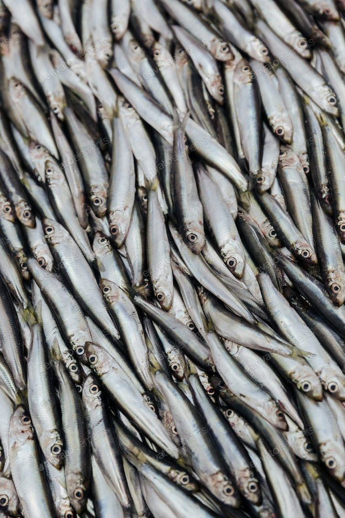 Pile of sprats