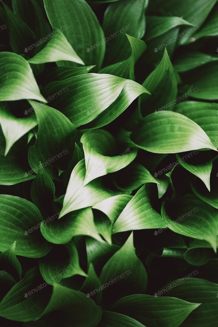 Nature concept. Top view. Green leaves texture. Tropical leaf background