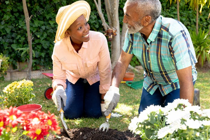Senior African American couple planting flowers in their garden .