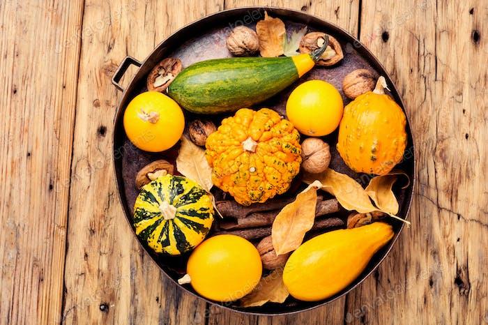 Autumn harvest pumpkin