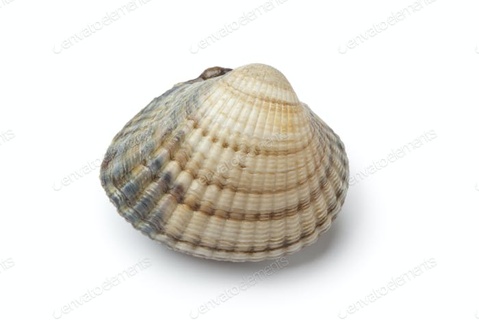 Whole single fresh cockle