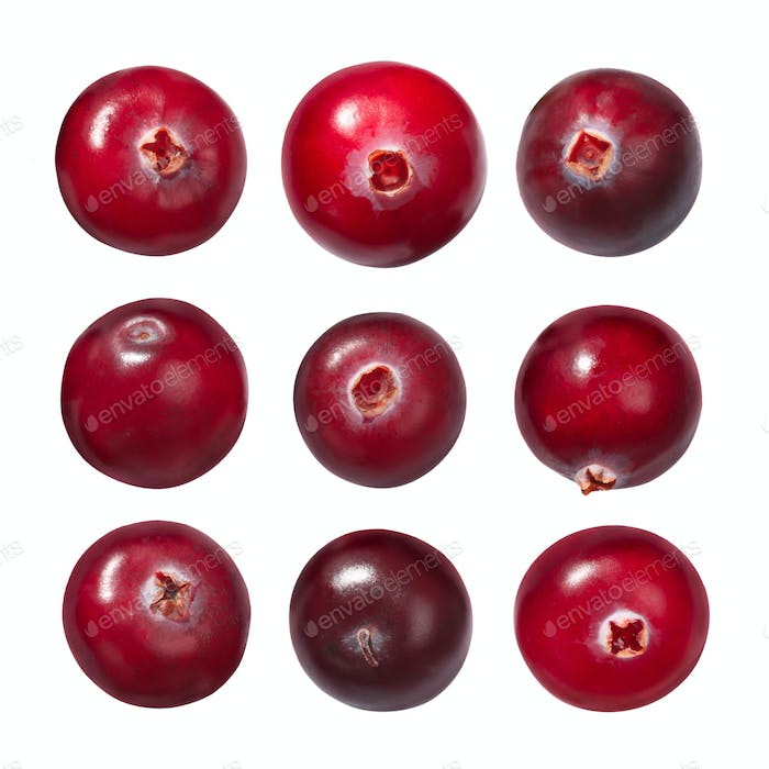 Cranberries v. oxycoccus, paths
