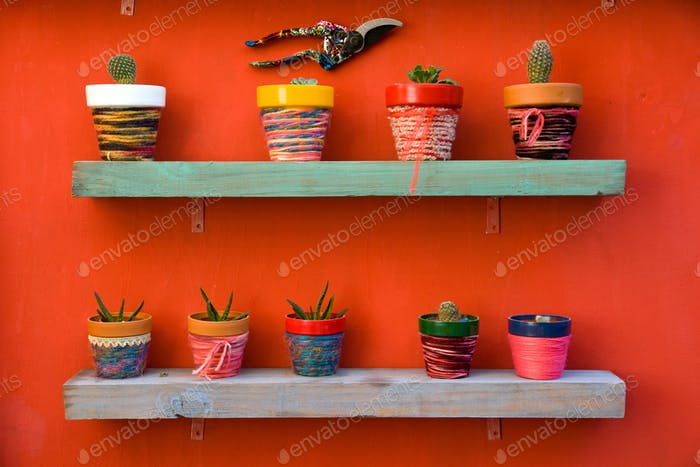 Shelf full of cacti