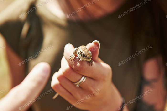 Lizard on woman's hand at sunny day outdoors. Conception of wildlife. Little reptile