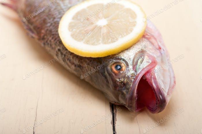 frischer ganzer roher Fisch