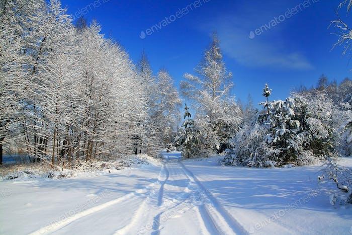 Wald nach einem Schneefall. Schöne Winterlandschaft. Weihnachtskarte