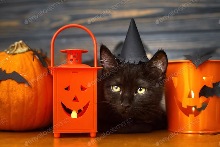 Black evil cat and pumpkin with bats on dark wooden background