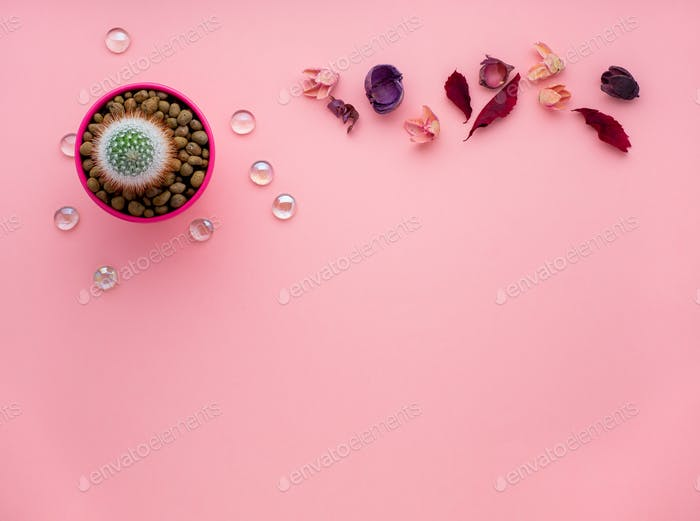succulent flower, dry leaves, potted cactus on bright pink background, top view, copy space