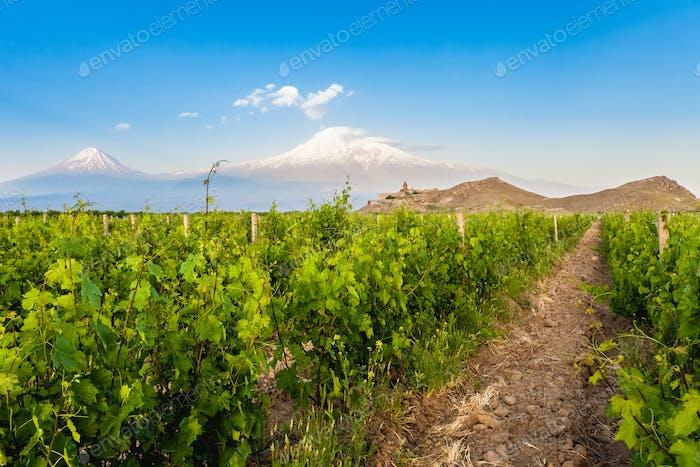 Khor Virap und der Berg Ararat