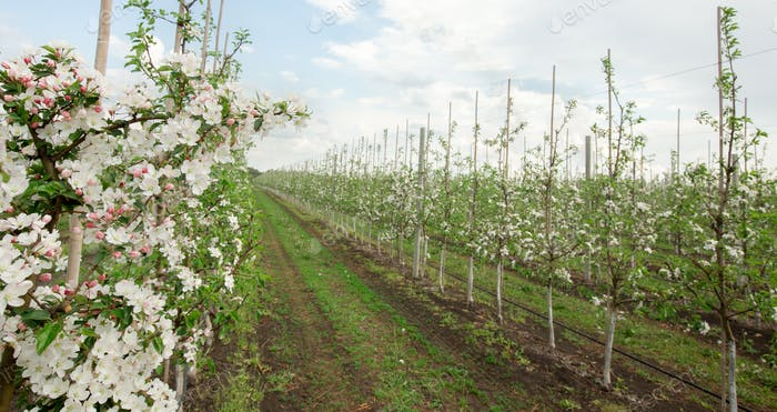 Beautiful fruits garden, agriculture business and industry