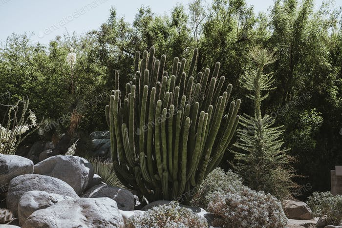 Prickly wild cactus