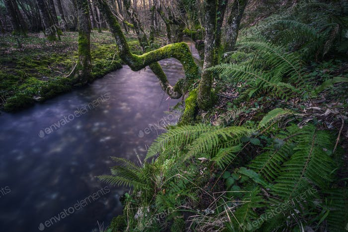 Moody atmosphere on a Cold River between Ferns