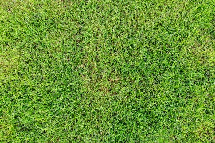 Beautiful green grass texture background