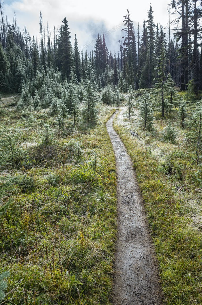 Wir und schlammigen Wanderweg nach Bergsturm, üppige subalpine Wiese in der Ferne, Mt. Adams